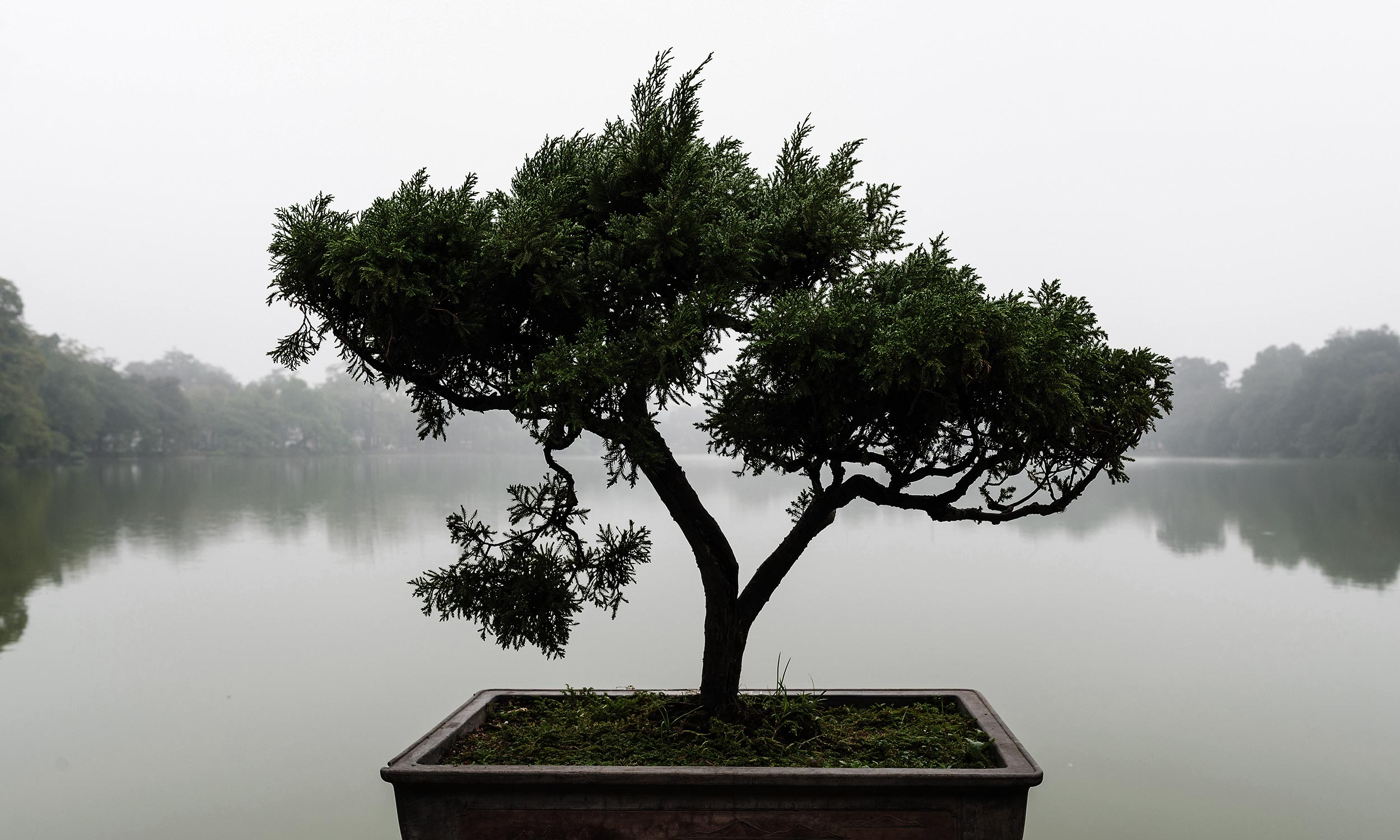Slide_Exklusiv_Bonsai_1