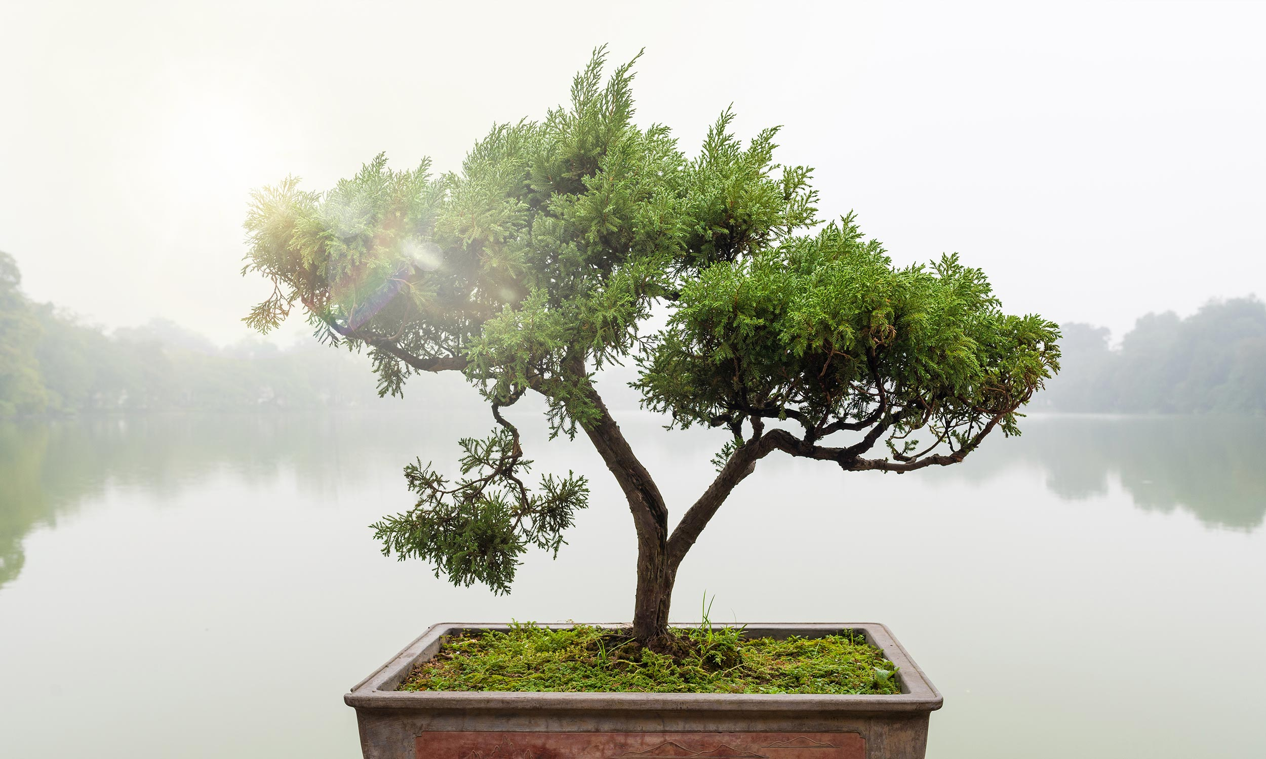 Slide_Exklusiv_Bonsai_1_2
