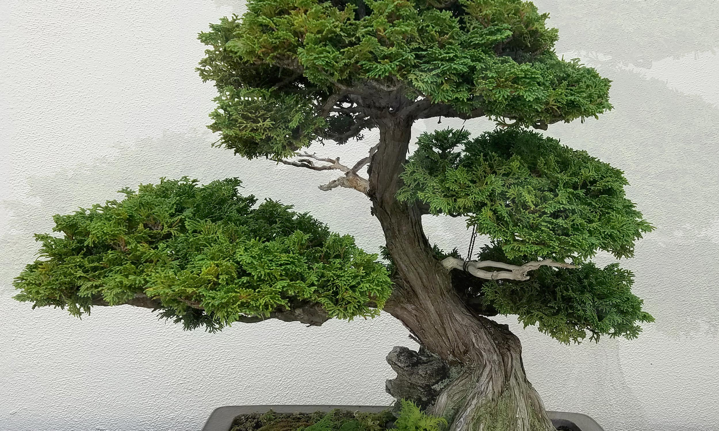 Slide_Exklusiv_Bonsai_5